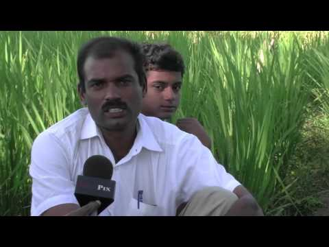 New Paddy Capsule Cultivation - Innovative Idea From a Rural Farmer