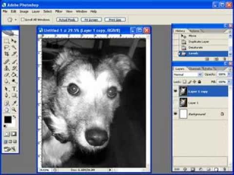 Creating A Dog Portrait Pattern w/ Photoshop Pt 1 of 7