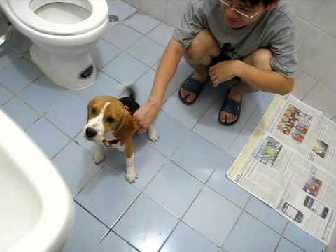 Our family beagle :D ... and my dorky bro