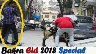 Bakra Eid Special Prank (2018) | Danger Fun Club
