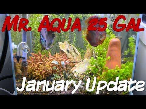 Mr. Aqua 25 Gallon January update 011915 - Moving Stuff Around