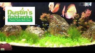 High Tech Co2 Aquarium Plant Tips Glosso Glossostigma Species Sunday