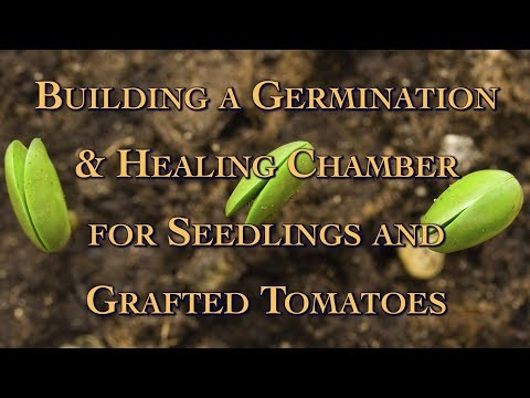 Building a Germination & Healing Chamber for Seedlings and Grafted Tomatoes