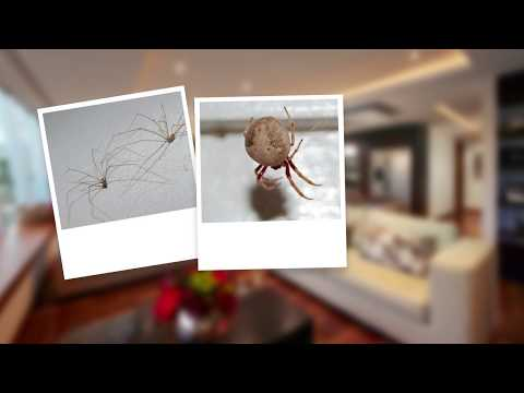 How to Get Rid of Spiders and Spider Webs
