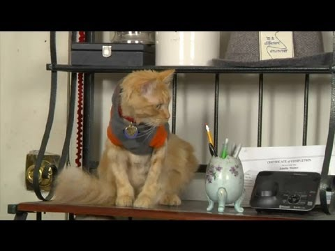 Ways to Stop Cats From Climbing on Furniture & Breaking Stuff : Cat Care Tips