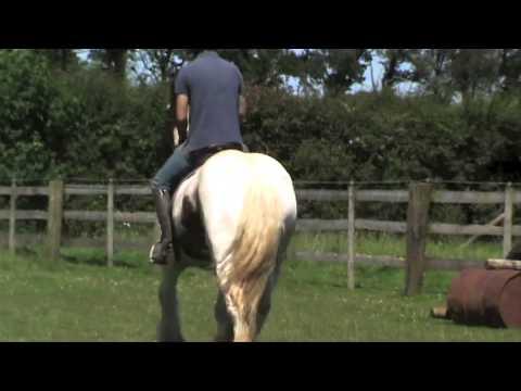 EQUINE HEADSHAKING CRANIOSACRAL SUCCESSFUL TREATMENT VIDEO