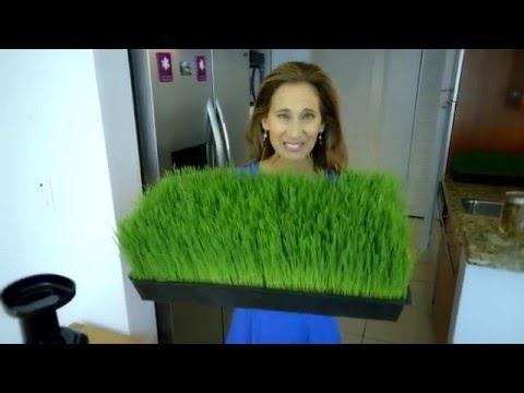 Juice Wheat Grass! with Yogi Nora