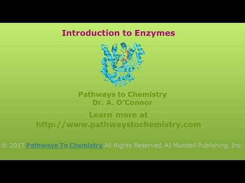 Introduction to Enzymes: Biological Catalysts