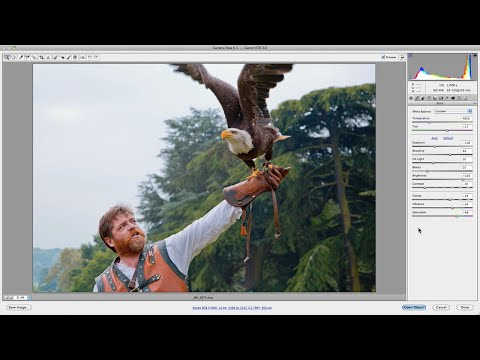 Camera Raw Basics: An Introductory Tutorial For Beginners