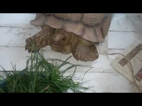 Pet tortoise being kept warm