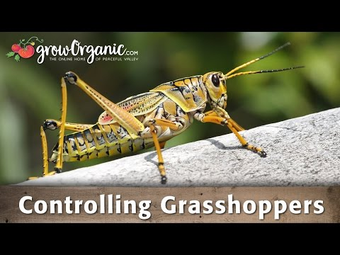 Controlling Grasshoppers