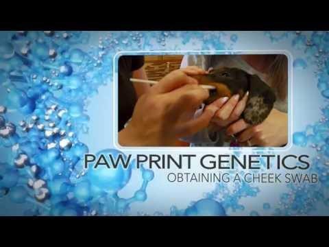 Paw Print Genetics - Swabbing Instructions -  2016