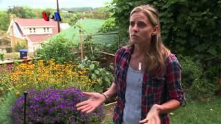Berkebun Sayur di Rumah Sendiri - Liputan Berita VOA