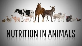 Nutrition In Plants And Animals Class 7 Videos 9videos Tv