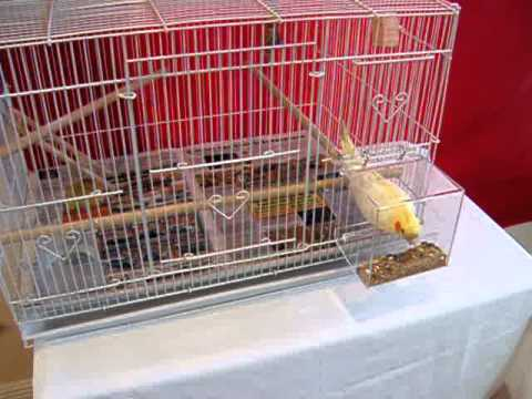 Tidy Seed No-Mess Feeder