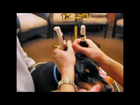How to post ears on a Doberman
