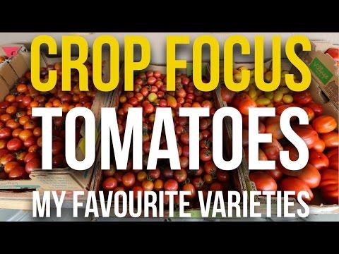 CROP FOCUS - Tomatoes - My Favourite Varieties