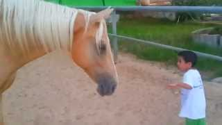 Young and untrained  horse creates a bond with a 4 years old child with a Williams syndrome