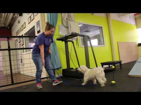 Dog reacts to physical touch   Touch and Target with Cooper