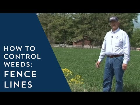 How to Prevent Weeds: Fence Lines