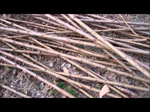 Making Tomato Stakes From Trees