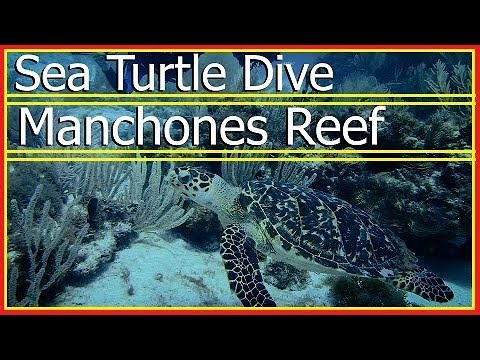 On the search for SEA TURTLES! Manchones Reef