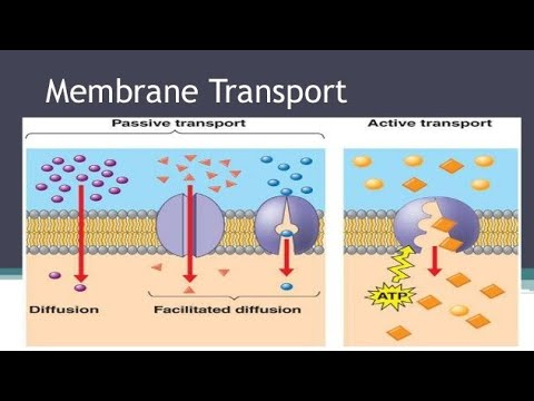 Membrane Transport Part - 1