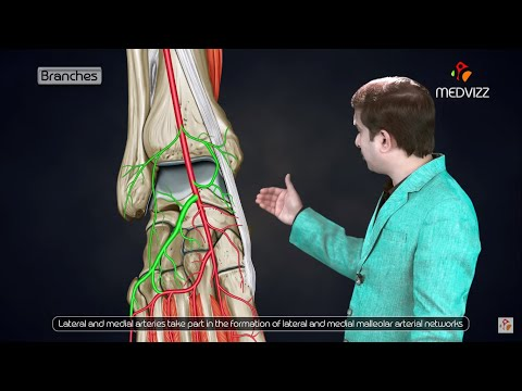 Dorsalis pedis artery animated lecture -  ( Lower limb Gross anatomy from Dr vishram singh )