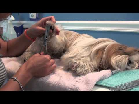 Grooming Series: Trimming the Paws