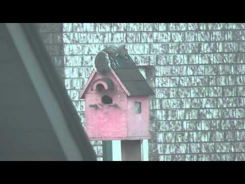 Squirrel on a birdhouse