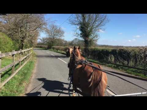 Twins in tandem - carriage driving
