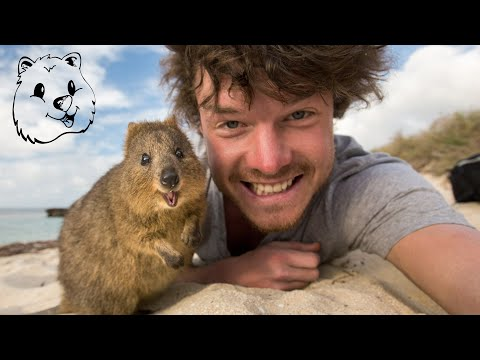 Quokka Selfie Tutorial - The Ultimate Guide