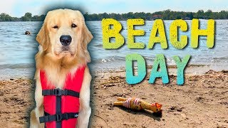 Taking My Dog to the Beach