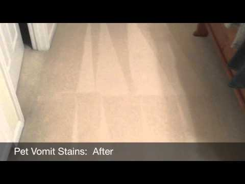 Getting Pet Vomit Stains Out Of White Carpet