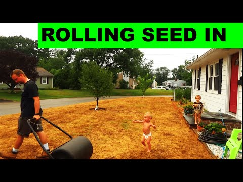 How to Roll Grass Seed into Place for Amazing Germination