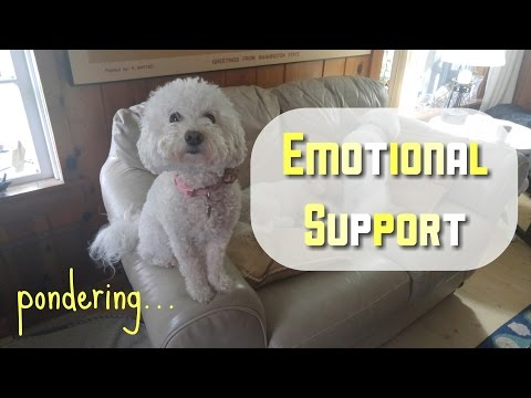Pondering Emotional Support Dogs: Does my Bichon make me a MilSO stereotype???