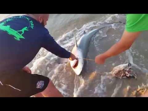 Matagorda Texas Shark Week