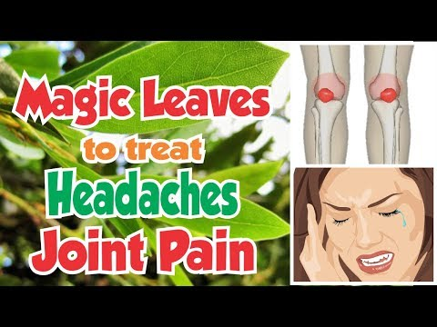 Try This Magic Leaves to Treat Headaches And Joint Pain - Best Natural Home Remedies