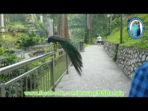 Visit to the Kuala Lumpur Bird Park - Budgerigar Society of Bangladesh - Yes Global