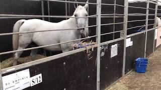 stanowka koni arabskich janów podlaski