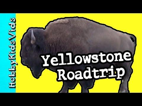 Yellowstone Roadtrip with HobbySpider -n- HobbyTiger! Bears + Waterfalls by HobbyKidsVids.