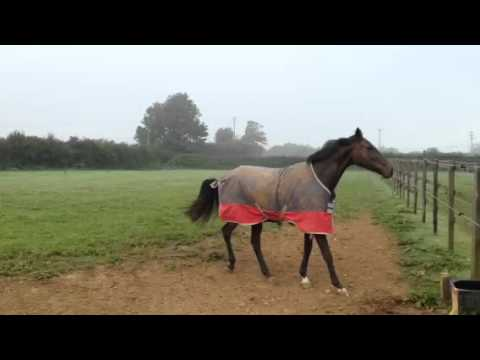 The Geegeez Geegee is READY TO RUMBLE!