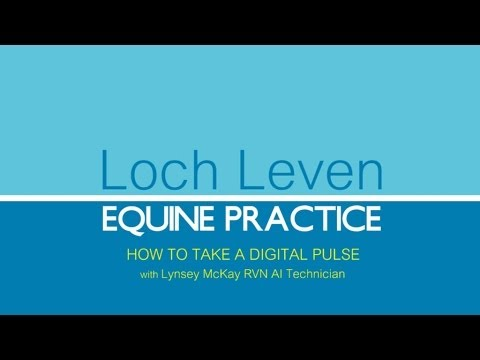 HOW TO TAKE YOUR HORSES DIGITAL PULSE WITH LOCH LEVEN EQUINE PRACTICE