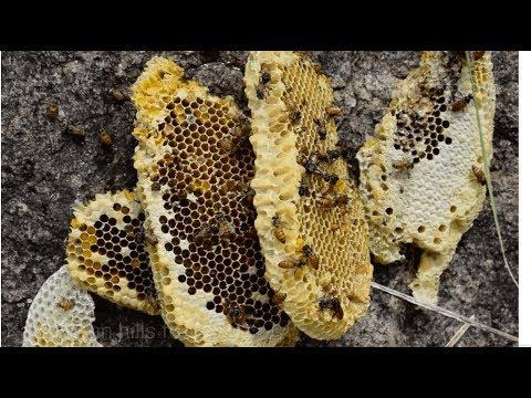 அடுக்கு தேன் | Very rare honey we found in kalvarayan hills place