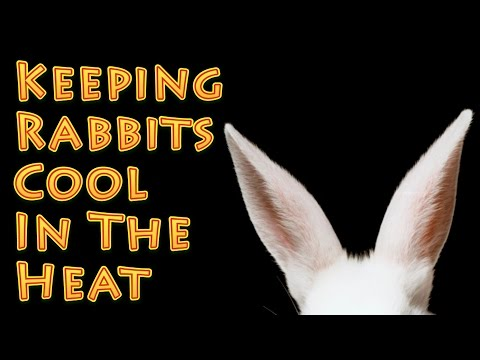 Keeping Rabbits Cool in Summer Heat