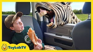 Download Animal Adventure Park Zoo with Animals for Kids, Dinosaur Fossil & Fun Outdoor Wildlife Activities Video