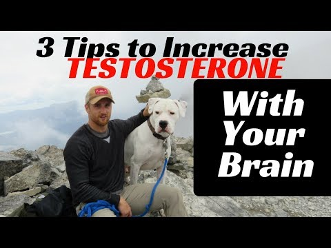 3 Ways to Increase Testosterone Levels With Your Brain