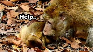 Help Need Help Poor Baby Was Attack By Old Man Tajas | Baby Cries So Scare