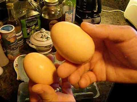 My chicken lays big double yolk eggs
