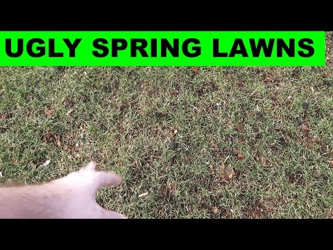 What to do if your lawn looks ugly in the spring